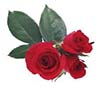 red rose love facebook chat code